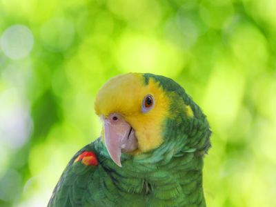 Good Words and Phrases to Teach a Talking Parrot