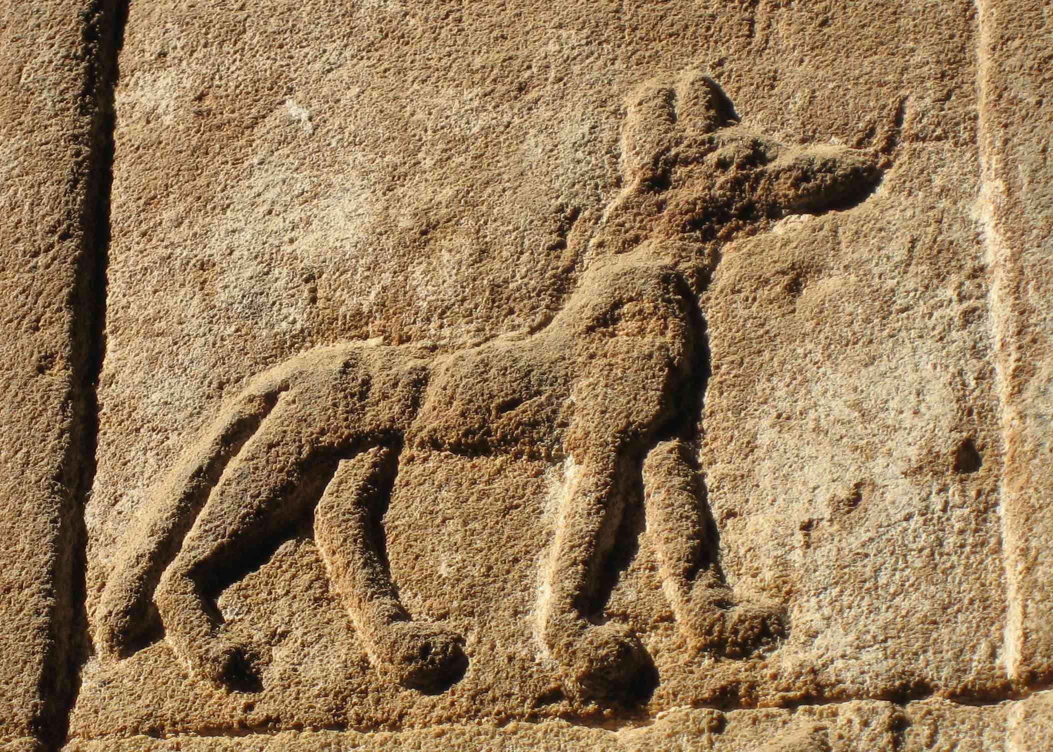 Dog on ancient Egyptian tomb