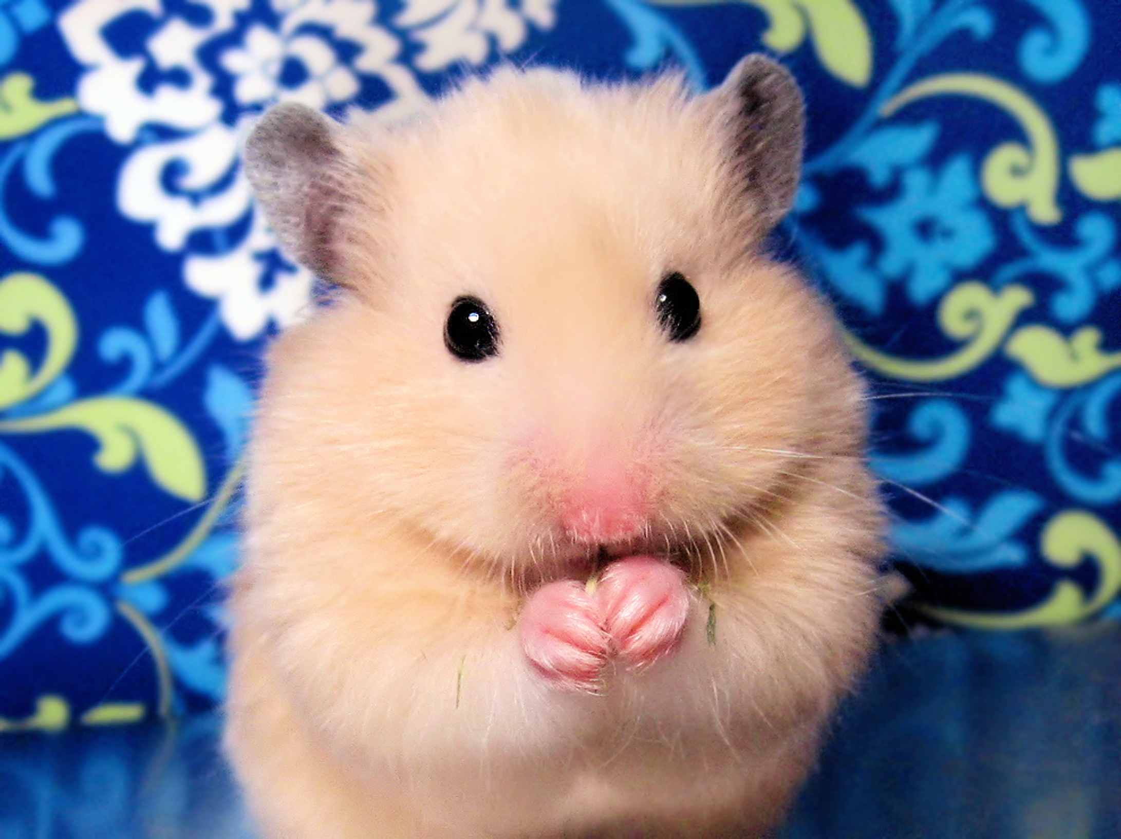 portrait of a hamster