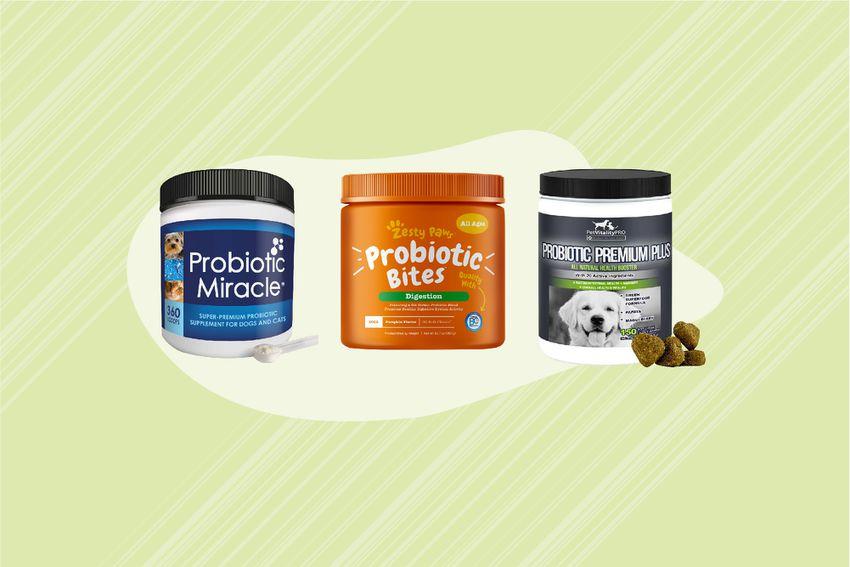 Best Probiotics for Dogs