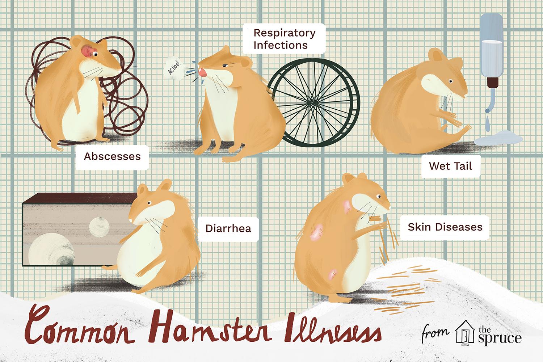 enfermedades comunes del hámster