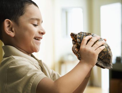 Caring For Reptiles Amp Amphibians