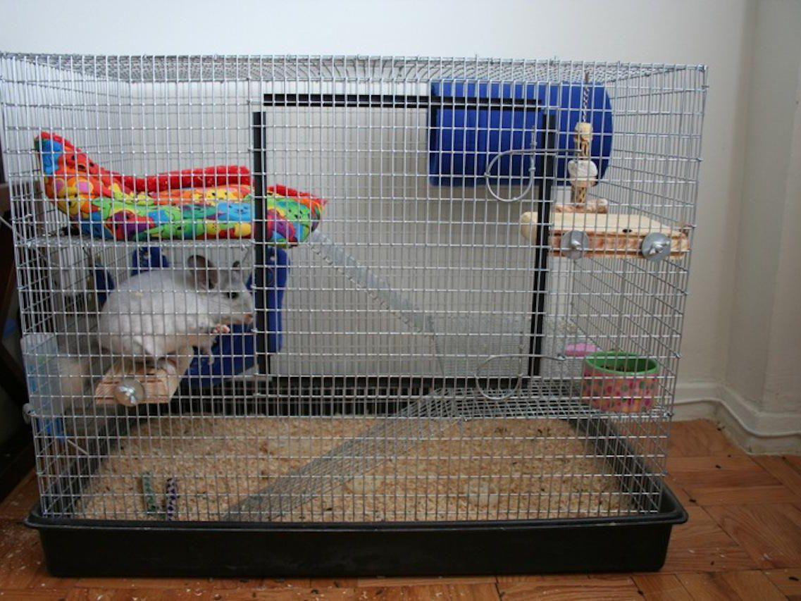 best 25 brd cage decoraton deas on pnterest.htm chinchillas as pets cages for pet chinchillas  chinchillas as pets cages for pet