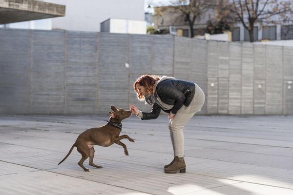 Person playing with dog outdoors