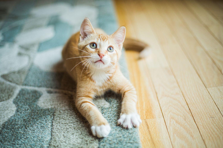 How to Handle Feline Urinary Problems