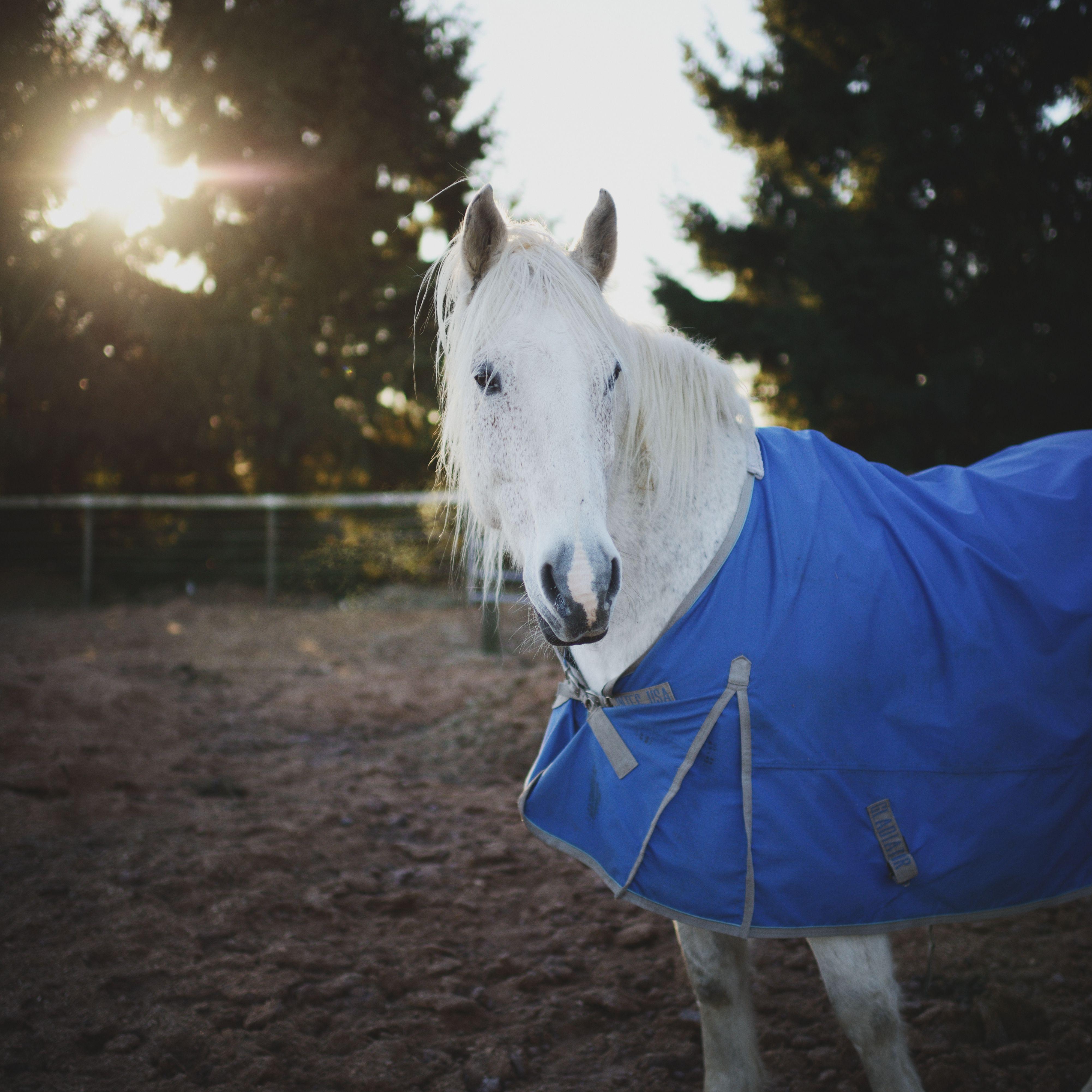 Un caballo blanco con una manta en la granja.