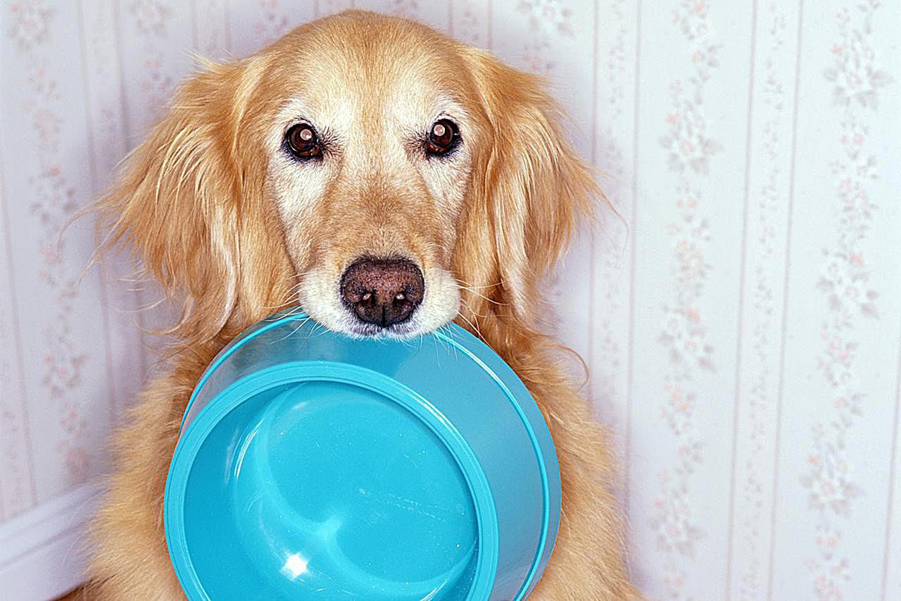 Home Prepared Dog And Cat Food Diets