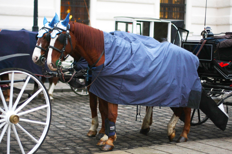 Un carruaje tirado por caballos con caballos en neveras