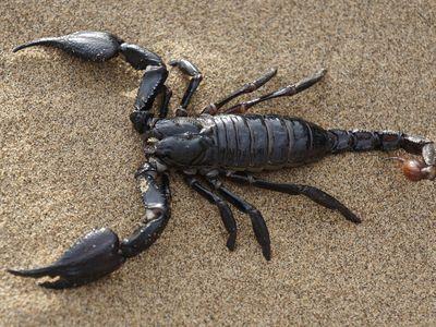 Scorpion Anatomy The Basics
