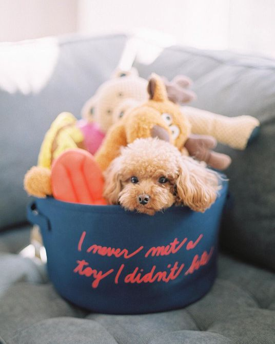 Perro en su cubo de juguetes