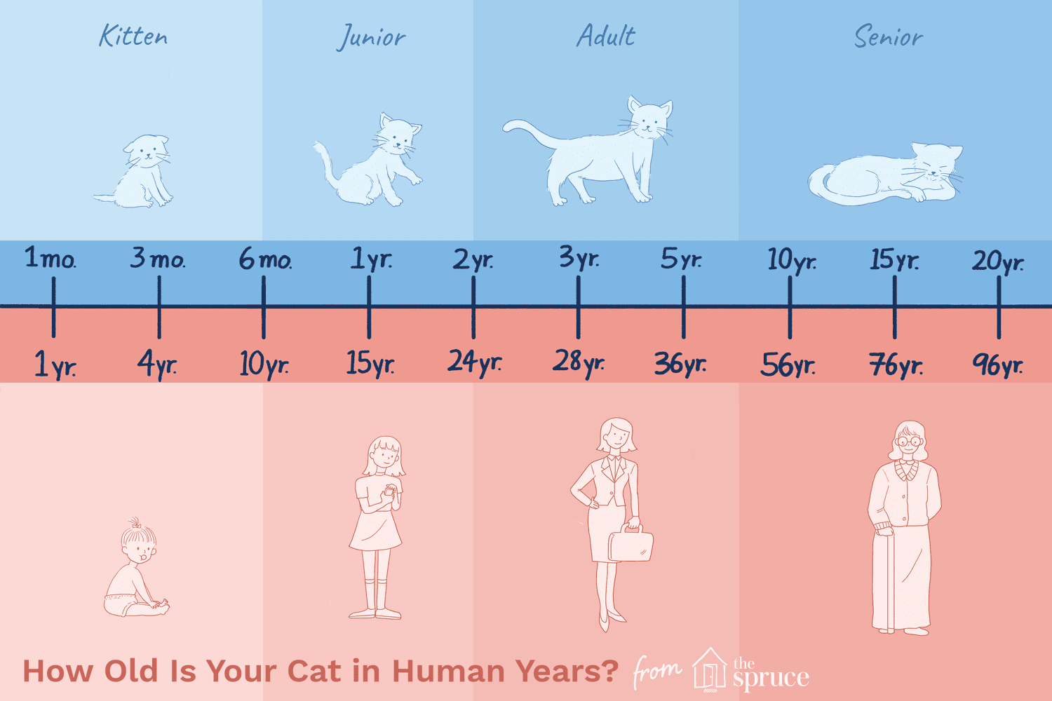 How Old Is Your Cat In Human Years