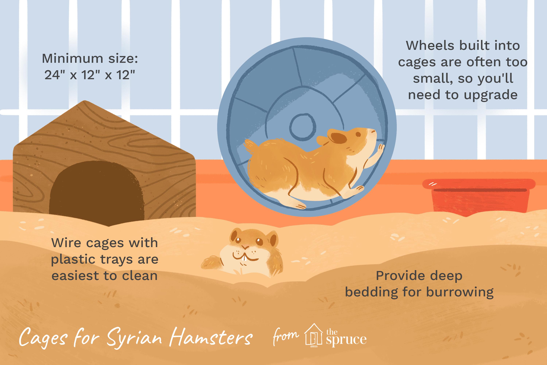 Una ilustración de los mejores atributos de una jaula para hámsters sirios