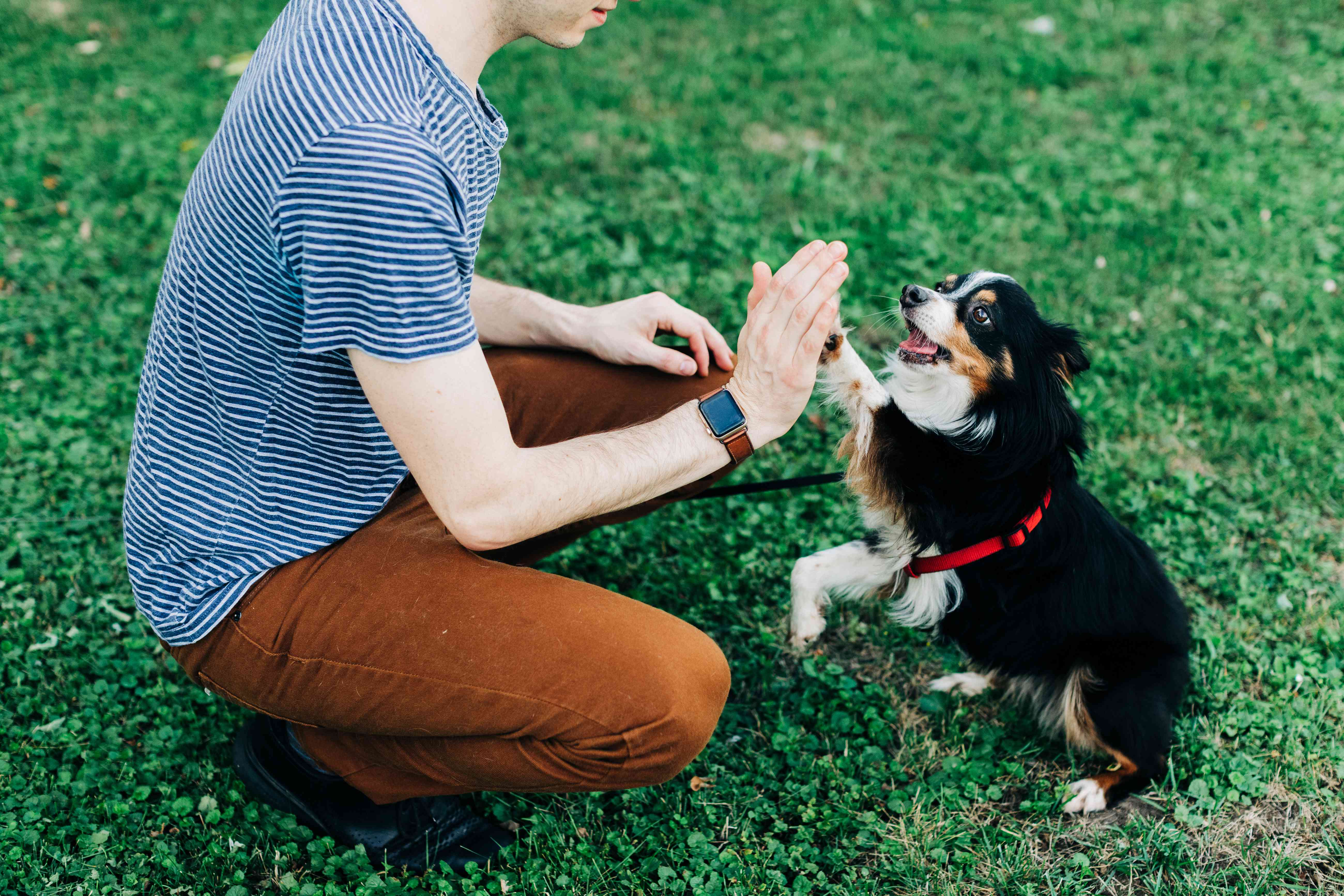Black and white dog giving high five to owner