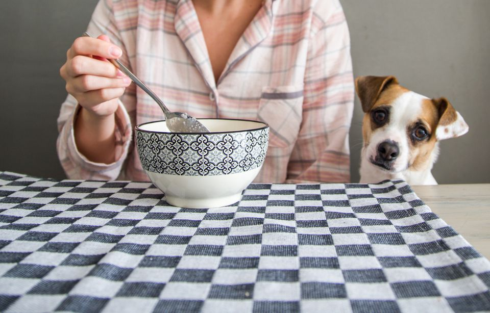 dog looking at bowl of quinoa