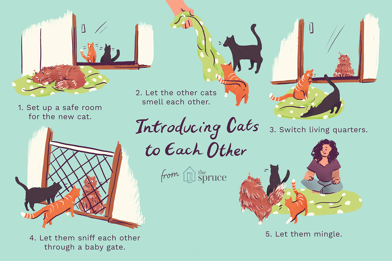 An illustration showing how to introduce cats to each other