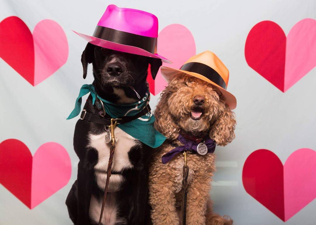 Two dogs dressed up for a photo booth