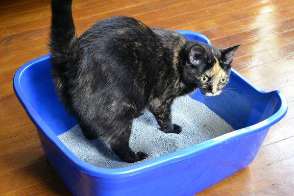 Van Ness Giant High-Sided Cat Litter Pan