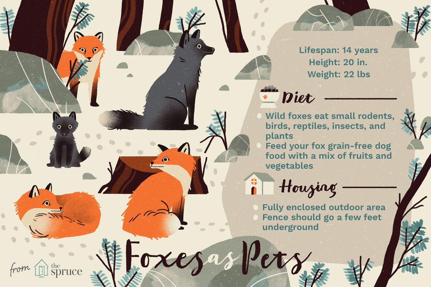 illustration of foxes as pets, care sheet