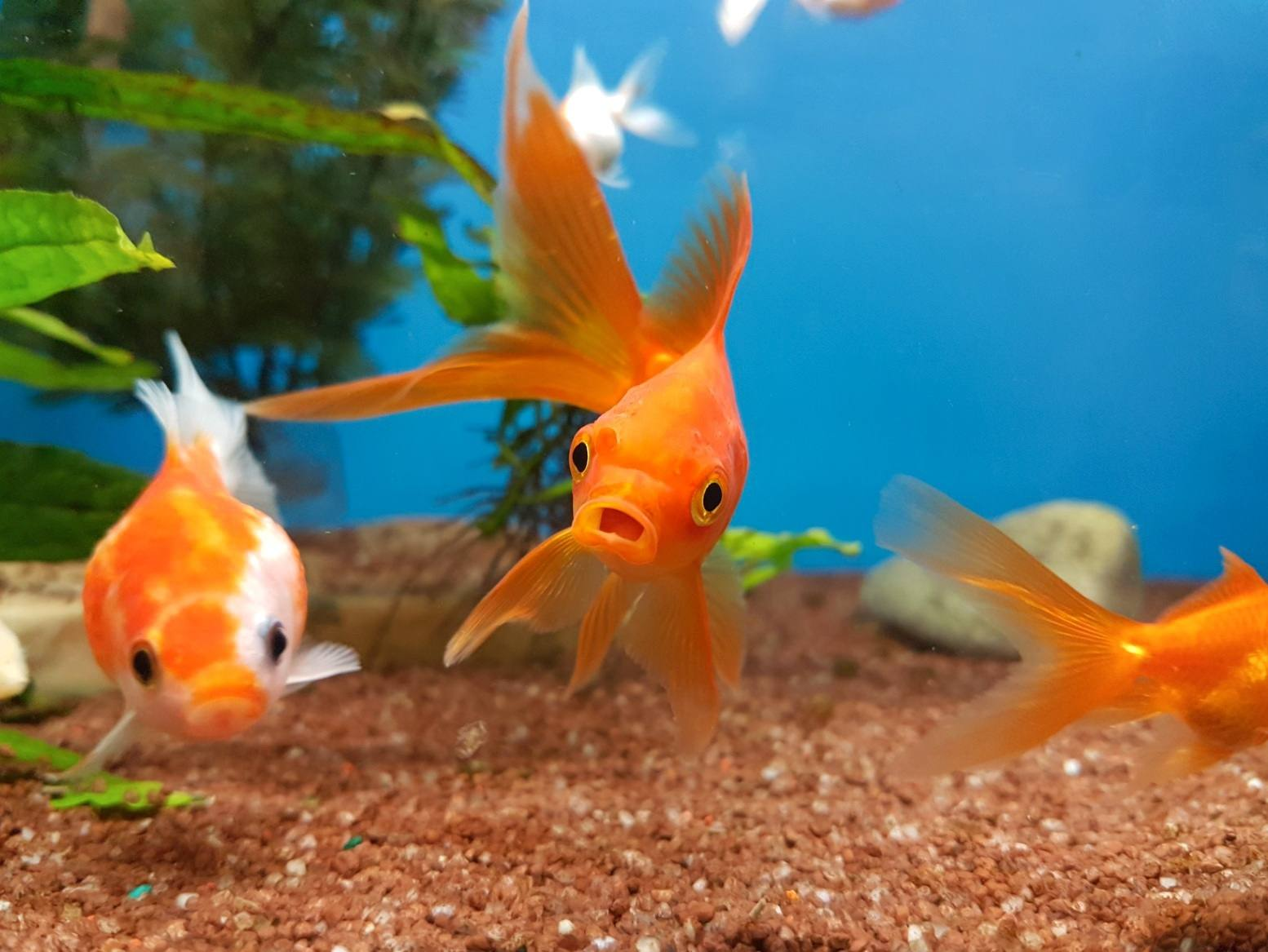 View Of Fish In Fish Tank