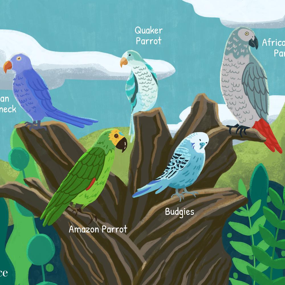 8 Best Talking Bird Species To Keep As Pets