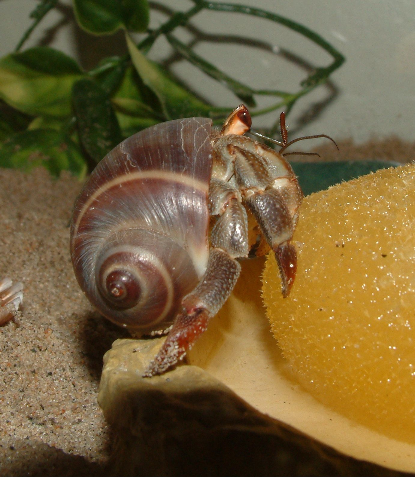 How Do You Make Hermit Crab Food