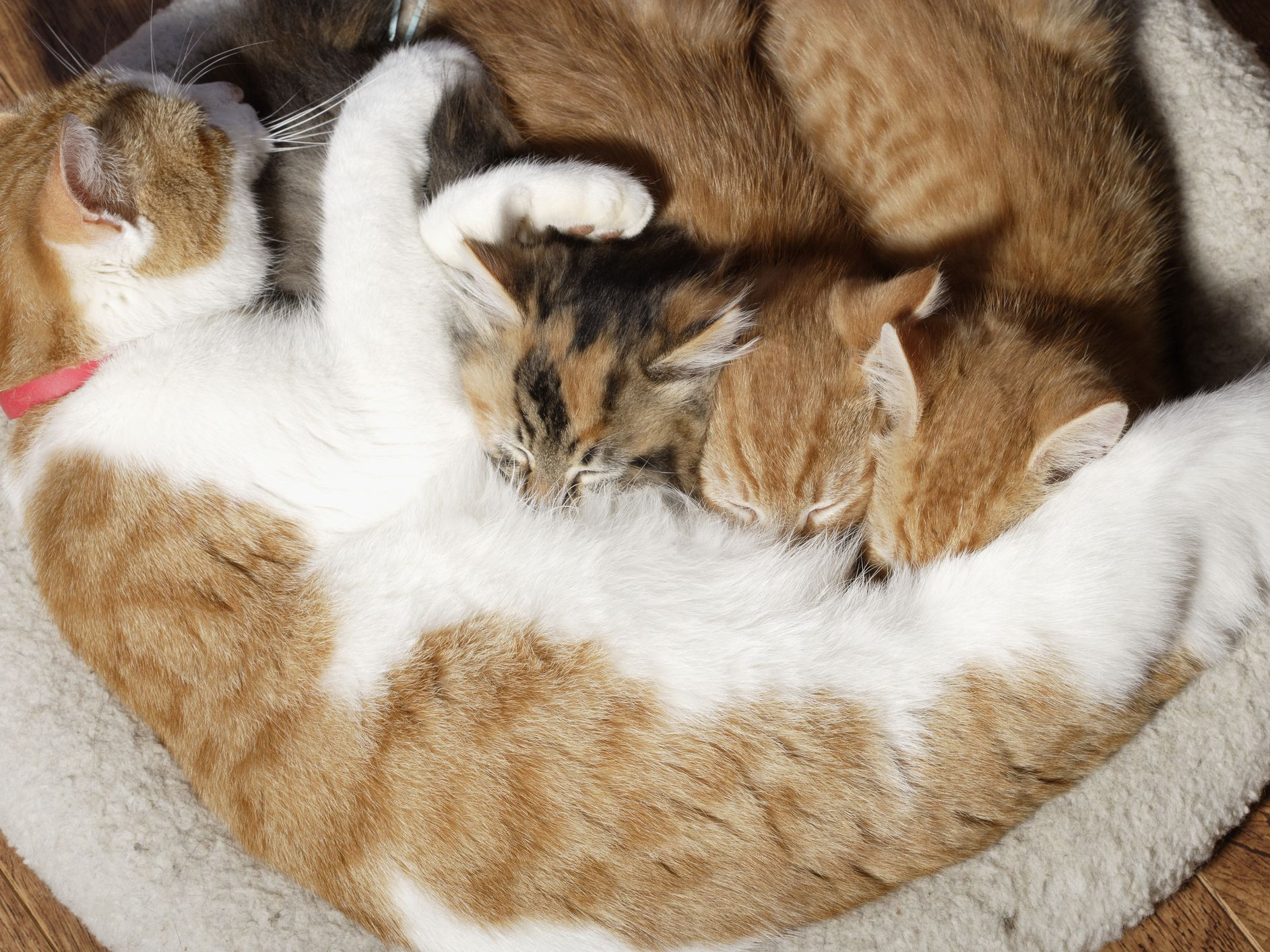How Long Should a Kitten Stay With Its Mother?