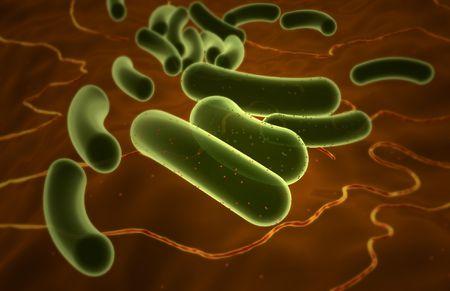 Preventing Escherichia coli (E  coli) Infection in Dogs