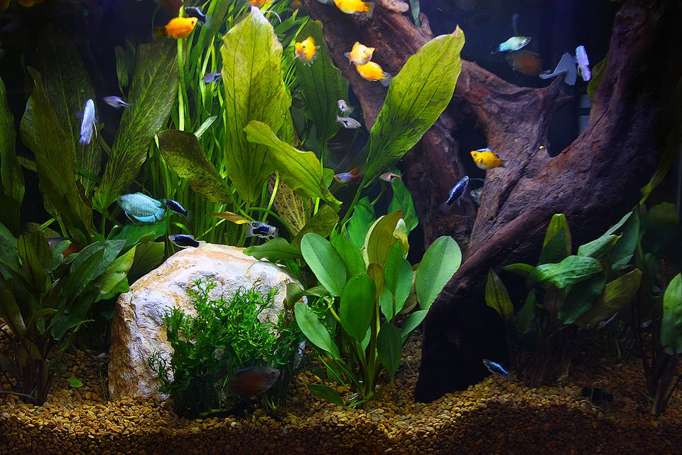 Aquarium and fish
