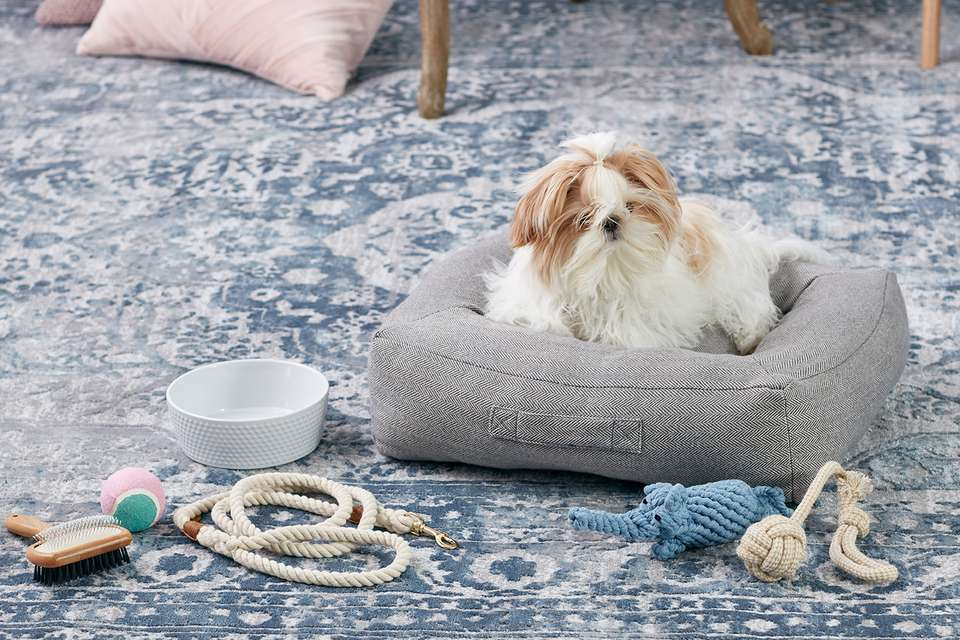A shih tzu puppy in a dog bed