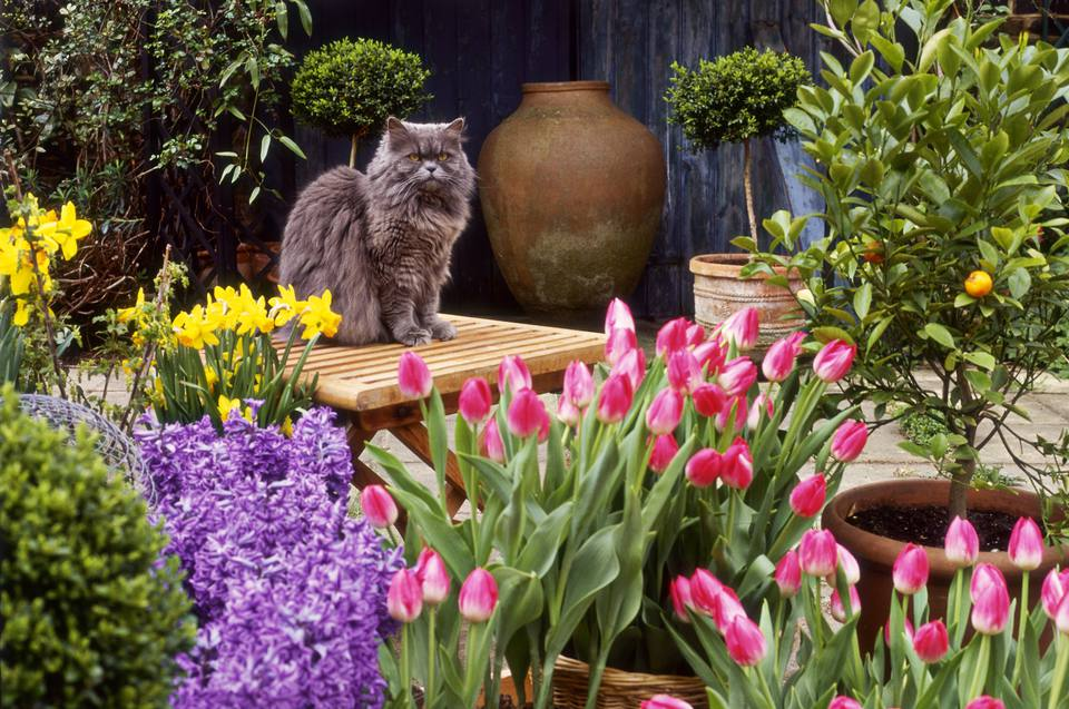 Spring flower display surrounding cat on table