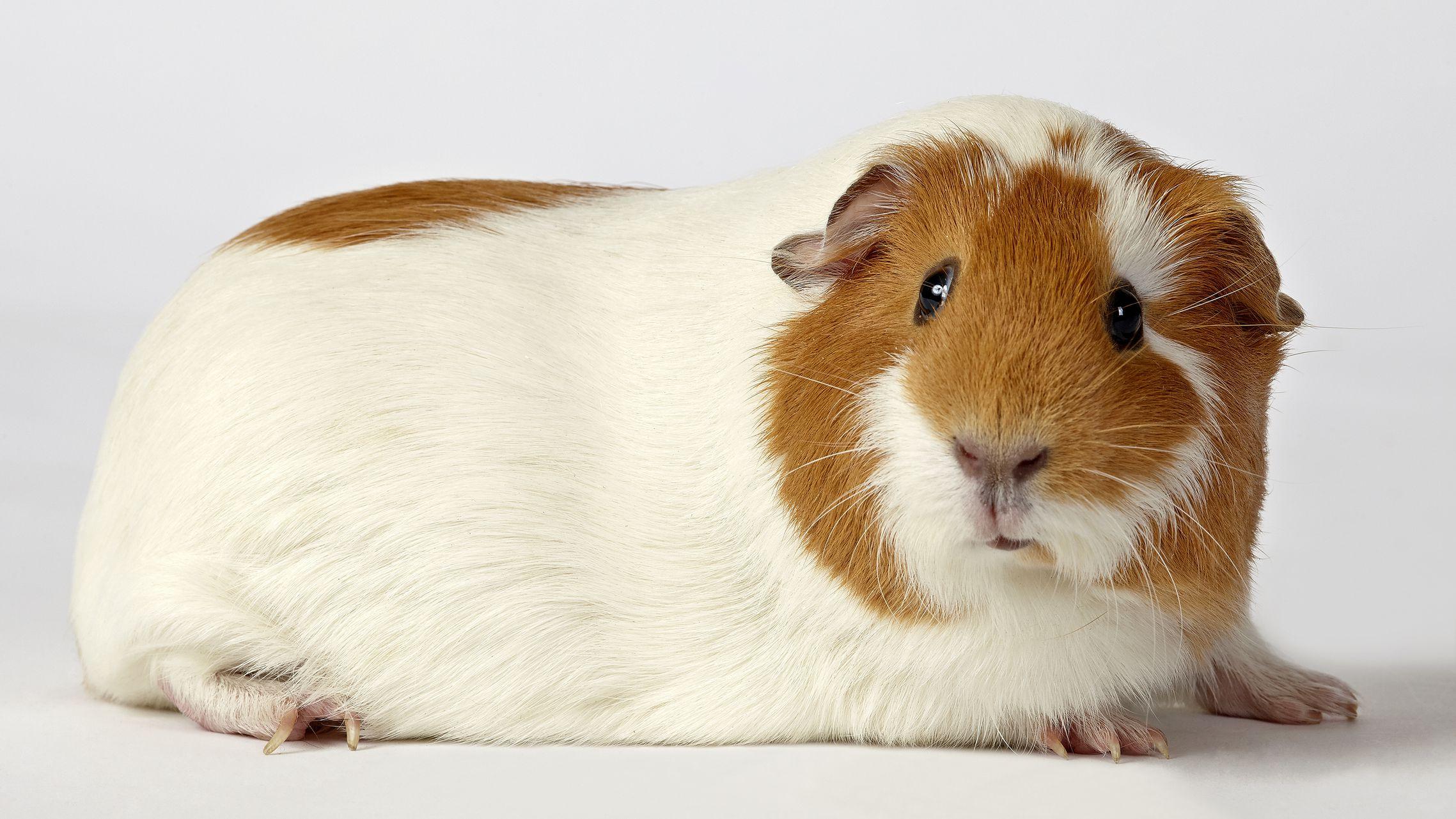 Craigslist Pets For Sale Sacramento - All Best Desktop ...