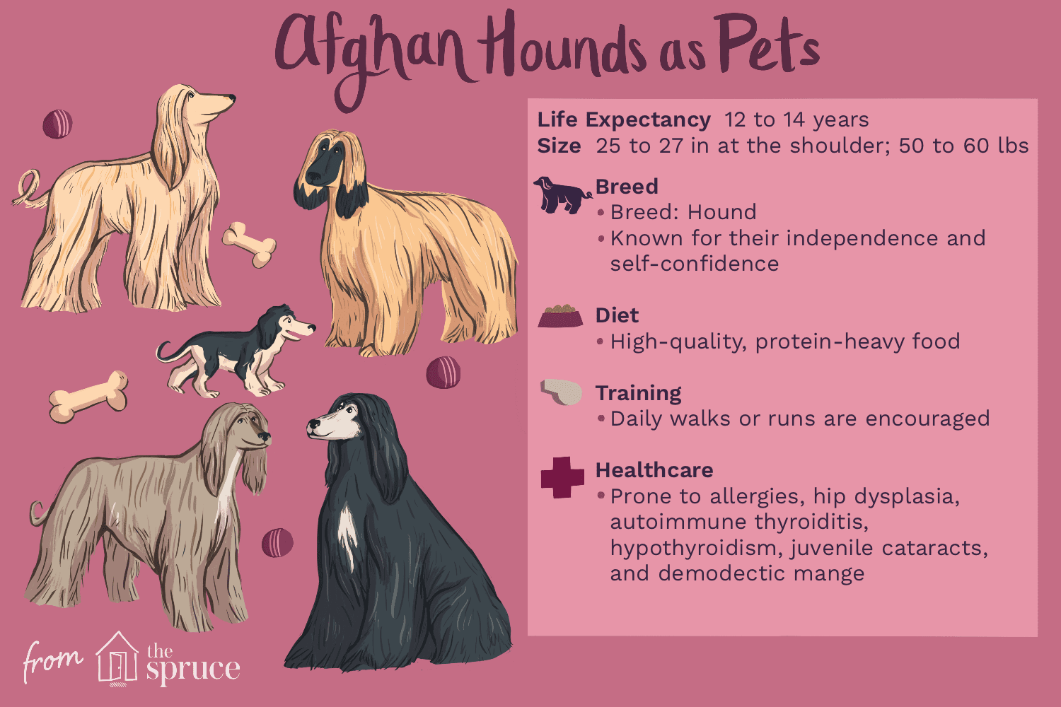 afghan hounds as pets
