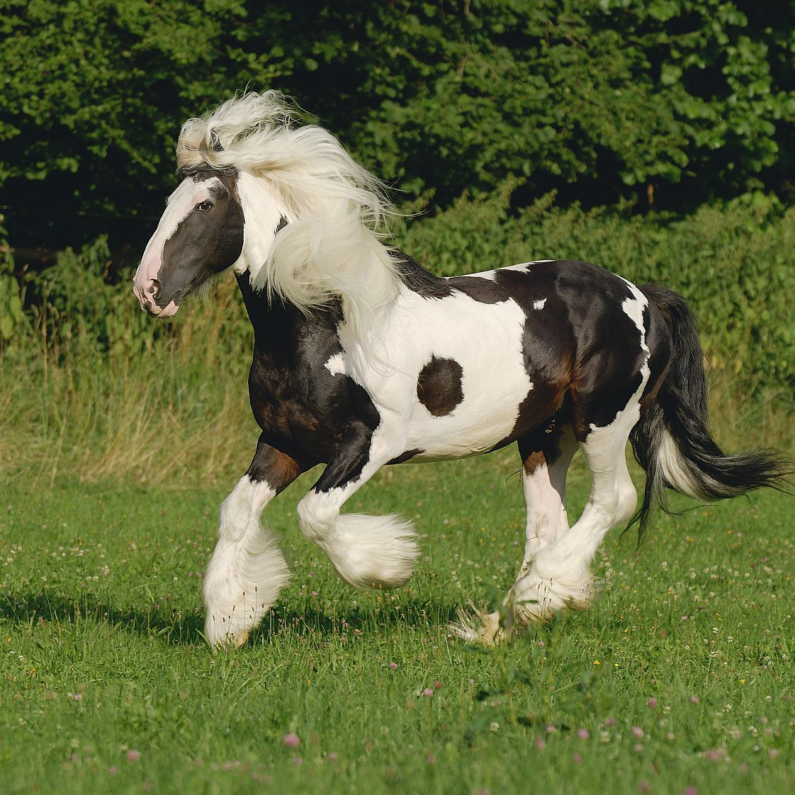 An Introduction To Cob Horses