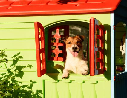 a happy dog looking out the window of a playhouse