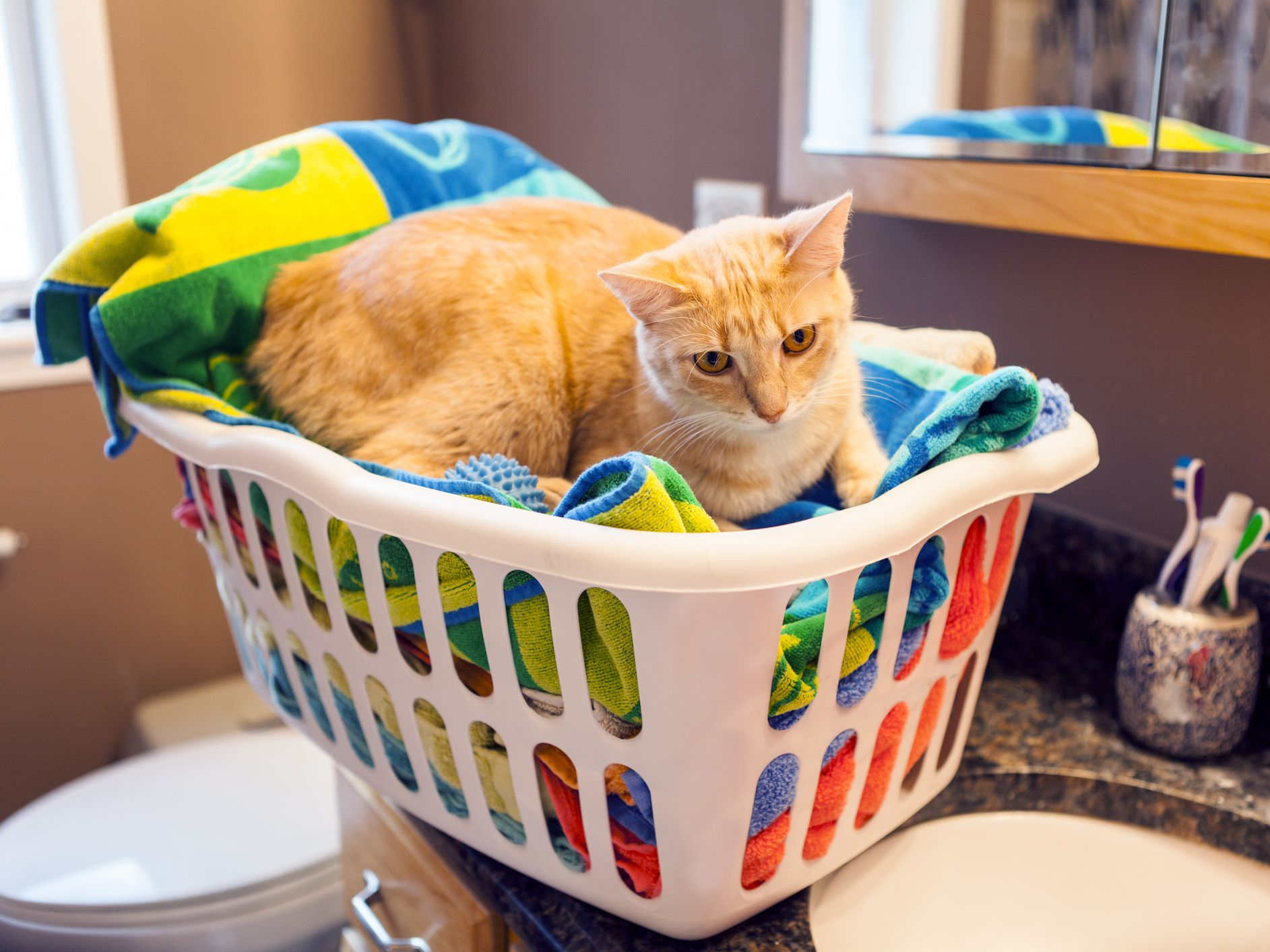 What To Do If Your Cat Ate A Dryer Sheet