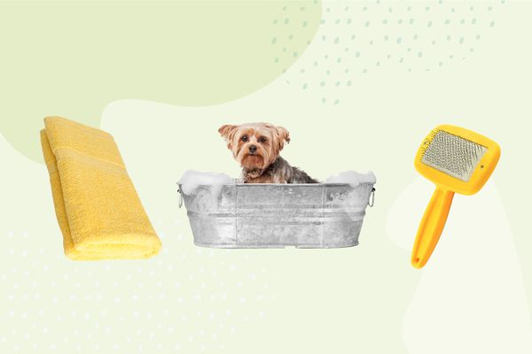 Best Dog Grooming Services