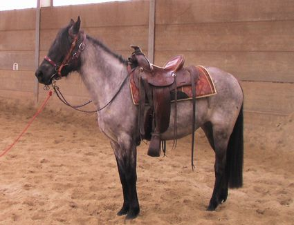 A horse wearing a saddle