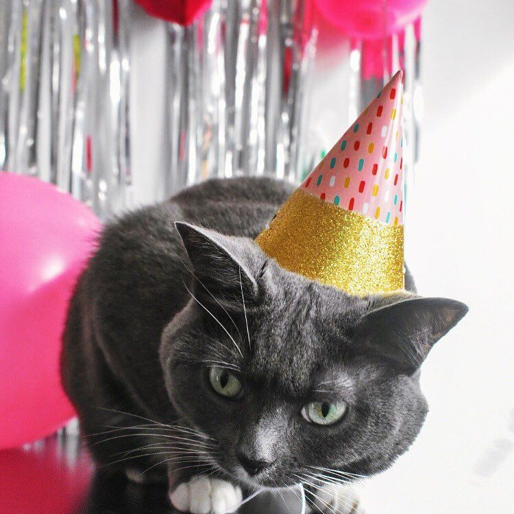 Cat with a birthday party hat.