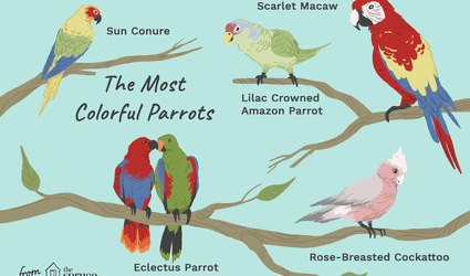 illustration of the most colorful parrots as pets