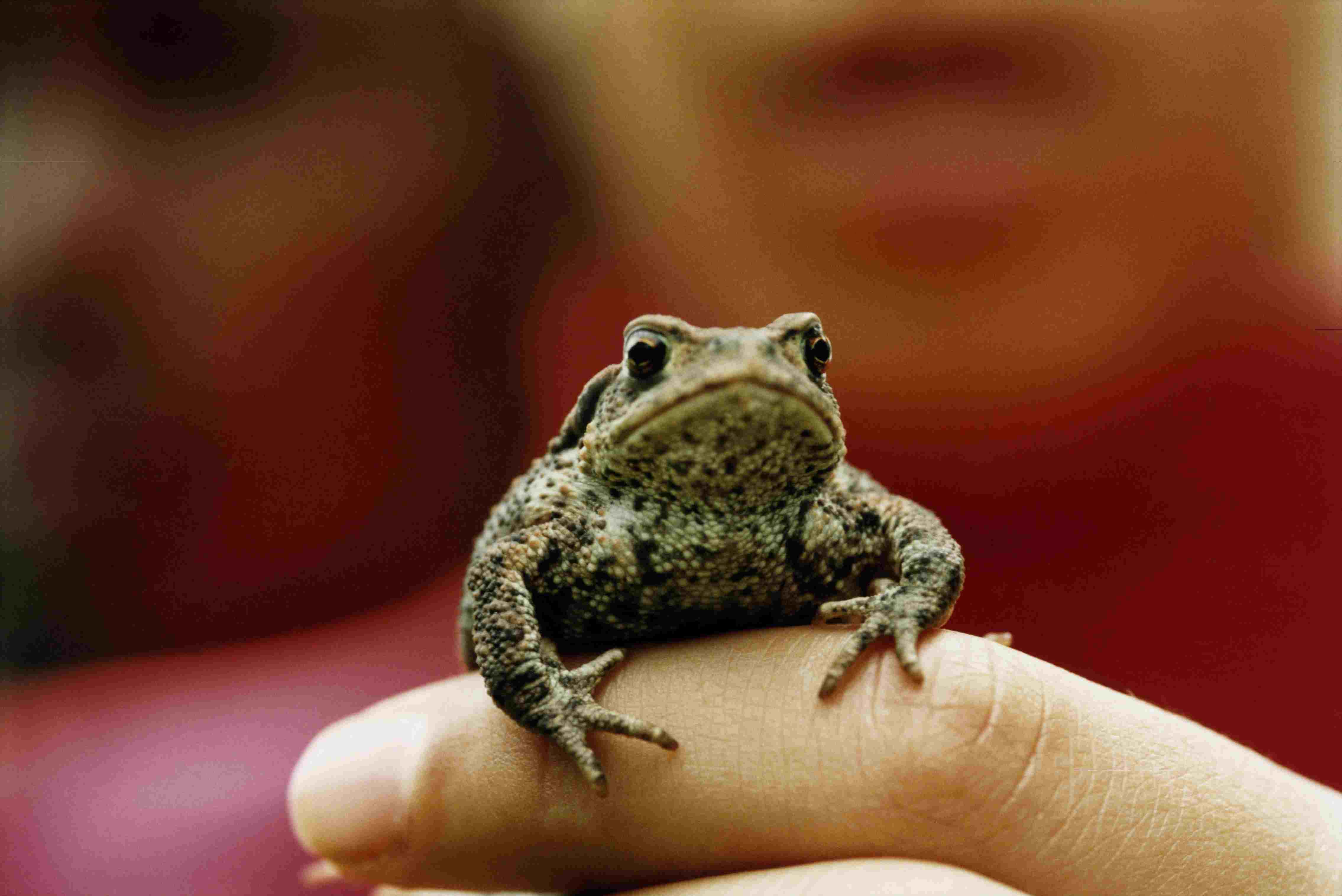small frog in a person's hand