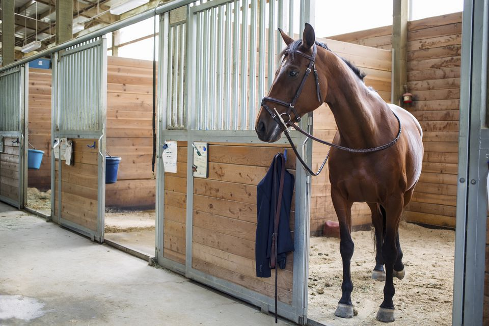 Horse standing at door of stable