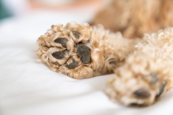 closeup of dog paws