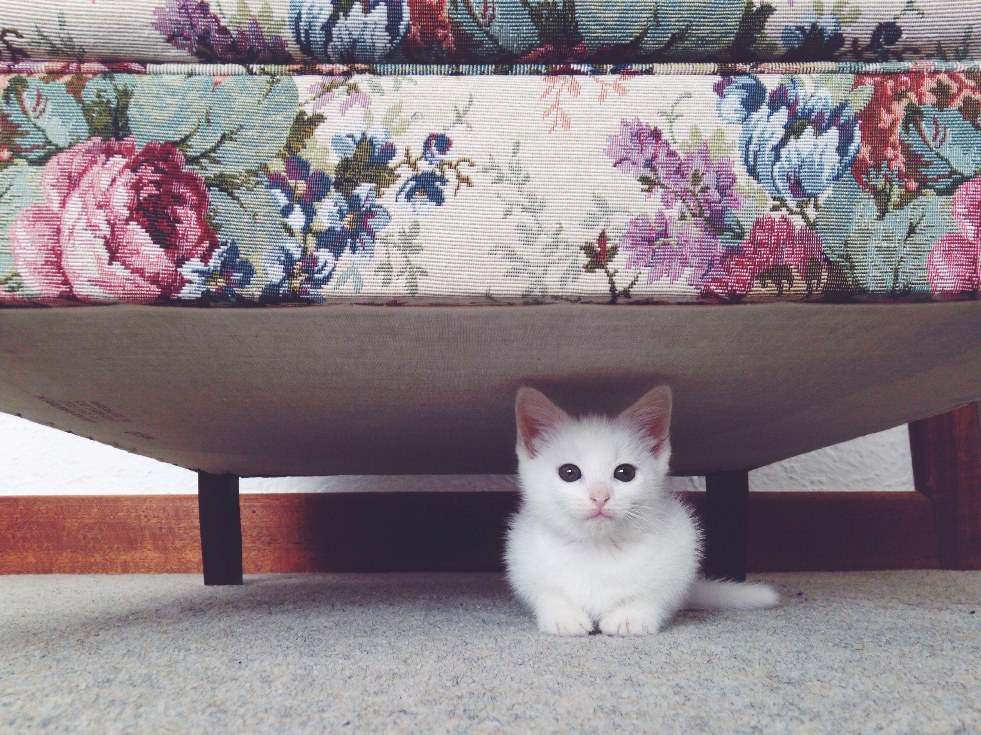 Gatito lindo debajo de la cama