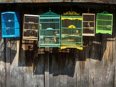 Read This If Your Bird's Cage Needs Sprucing Up