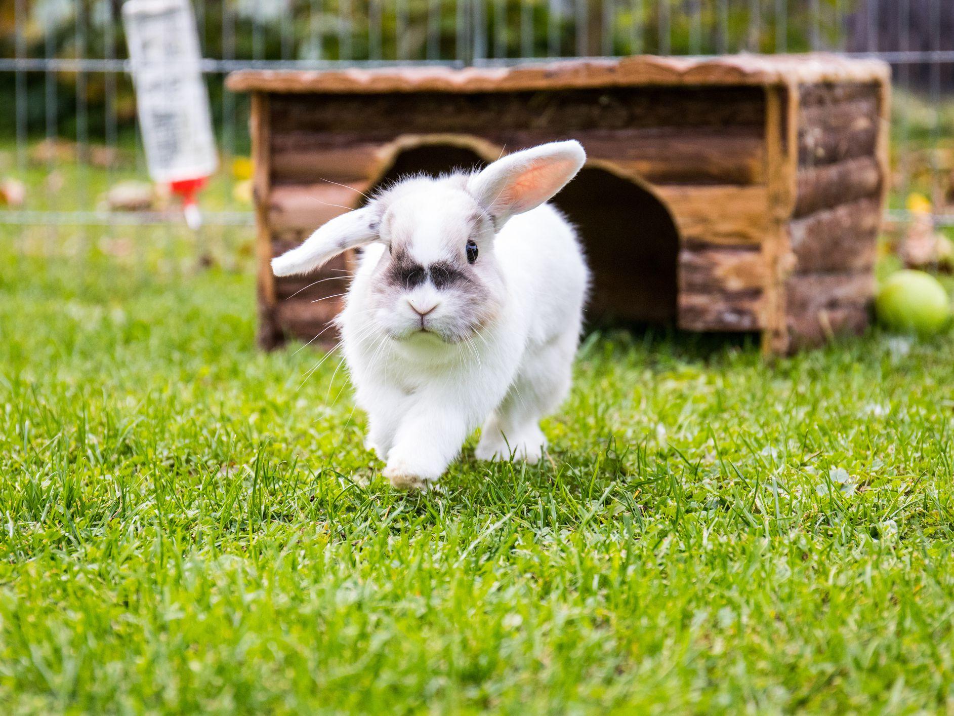 How Long Do Pet Rabbits Live