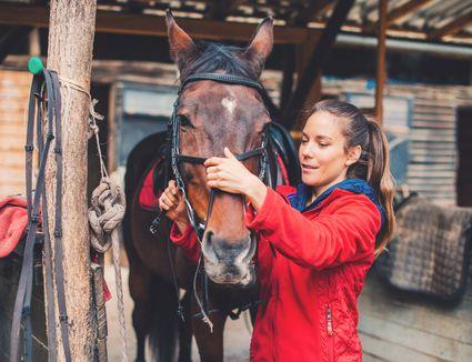 Horse rider preparing bridle