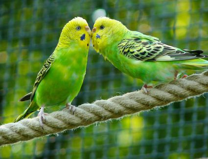 Dealing With The Loss Of A Pet Bird