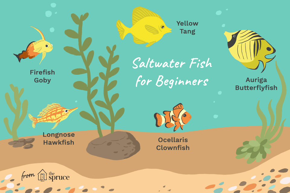 Illustration of the best saltwater fish for beginners