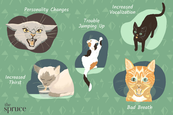signs your cat is sick