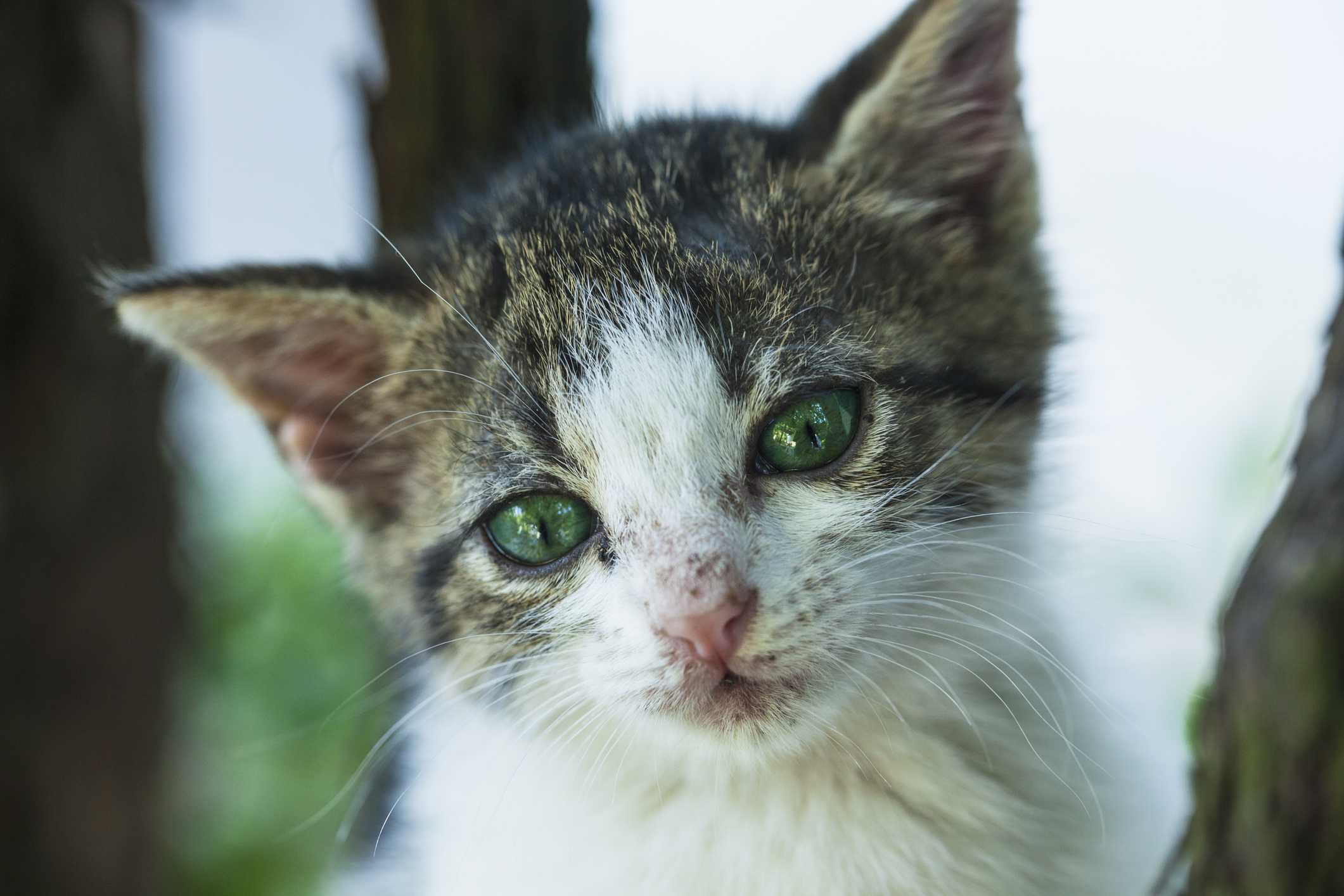 Close up of cat that's in poor condition
